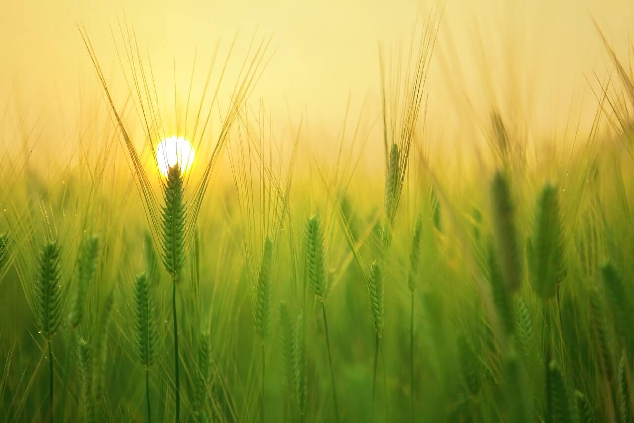 北海道の小麦粉は国内シェアトップ!ブランドの特徴とおすすめ用途