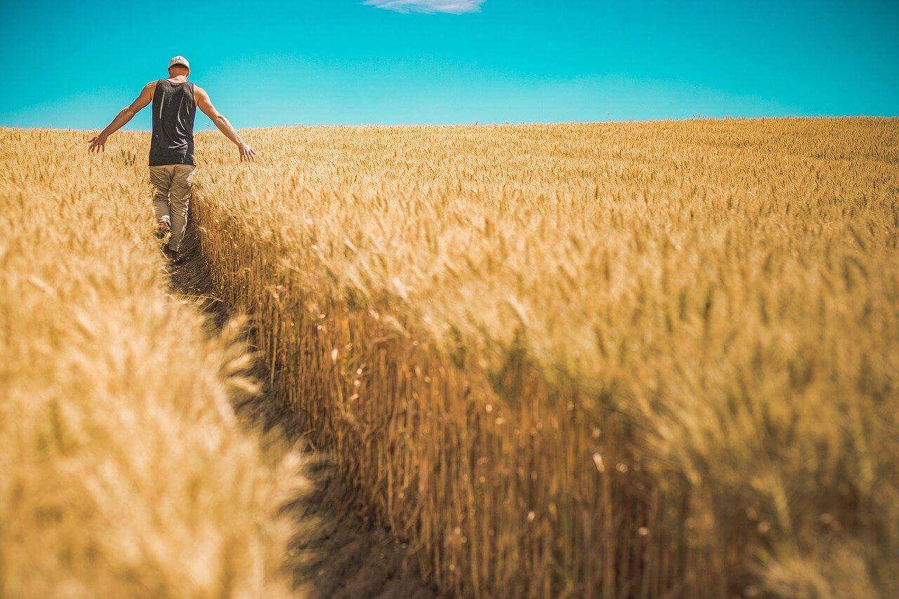 【小麦粉の歴史】人類初の作物って本当?日本に伝わったルーツも紹介