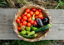 有機栽培の歴史から、未来につながるオーガニックを学ぼう!
